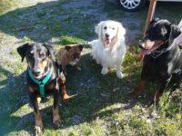 Dog sitter Savona