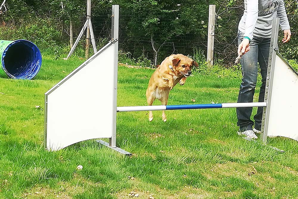 Agility dog-Savona Istruttore Cinofilo Viviana La Rocca